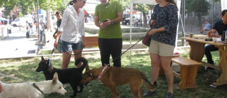 DRAGOMIR DIMITROV: WE HAVE A RESPONSIBLE ATTITUDE TOWARDS ANIMALS …