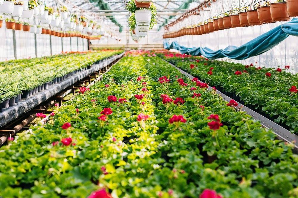 Еврис – качествени български цветя и подправки